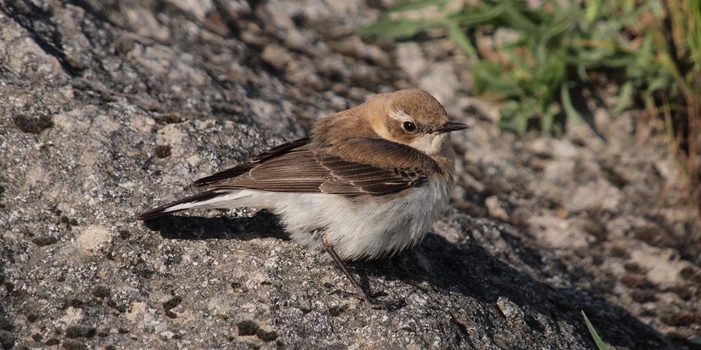 Natur- und Vogelschutzverein Oberhelfenschwil